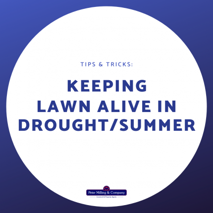 Keeping Lawn Alive in Drought